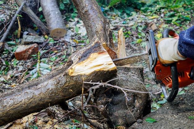 허리케인이 전기 톱으로 절단 된 후 부서진 나무에 떨어지는 나무