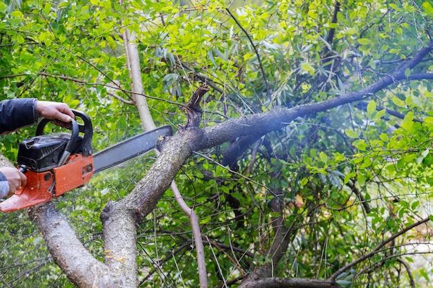 허리케인 후 전기 톱으로 나무를 부러 뜨리는 나무에 떨어지는 나무