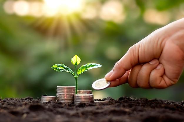 コインから成長する木と木にコインを与える手、そしてぼやけた自然の緑