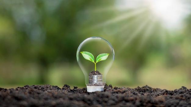 전구 플러스 흐린 녹색 자연 배경 지구의 날 에너지 절약 및 환경 개념에 동전에 성장하는 나무.