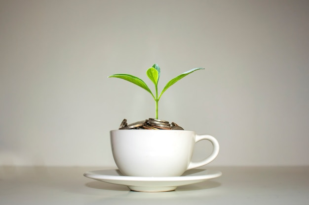ホワイトコーヒーカップのコインの山に生えている木経済成長のアイデアホワイトコーヒーカップ。