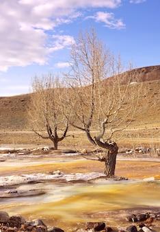 강 샘물에 나무 산 강의 흐름에 색 얼음의 잔재