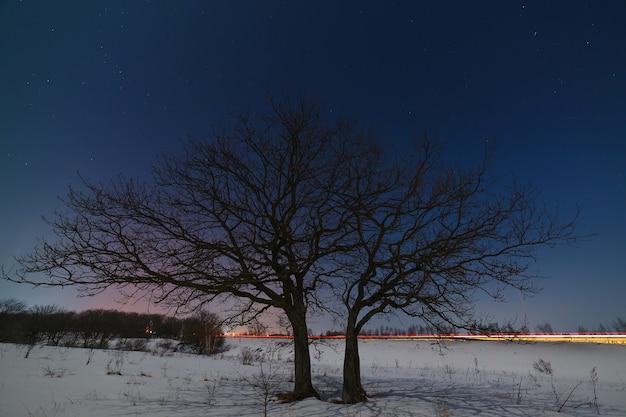 겨울에 별이 빛나는 밤하늘을 배경으로 도로 근처의 나무