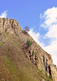 바위 위의 나무 푸른 하늘을 배경으로 가파른 바위 경사면의 산 소나무