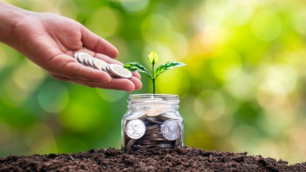 돈병에서 자라는 나무와 동전을주는 손. 나무. 재정적 아이디어와 성장하는 경제 방향.