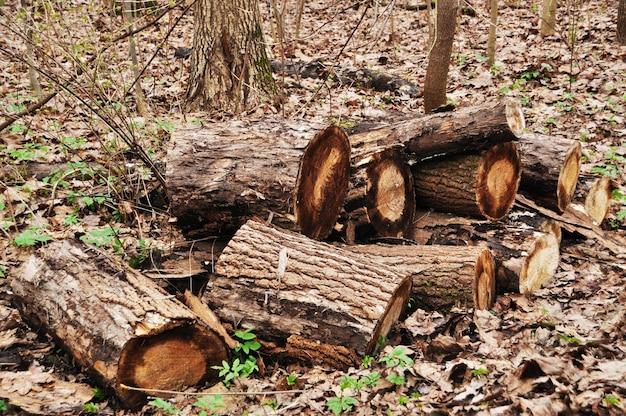 細かく切った木の幹。紅葉の倒木。公園の秋。 Premium写真