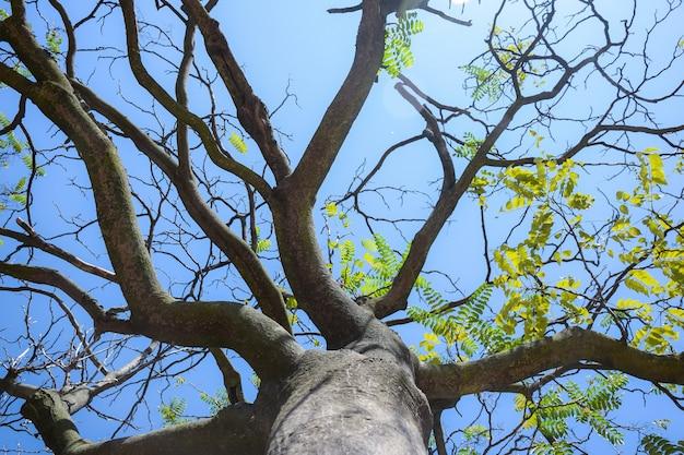 Дерево с несколькими листьями было снято снизу, возле столба, на фоне ярко-синего неба.
