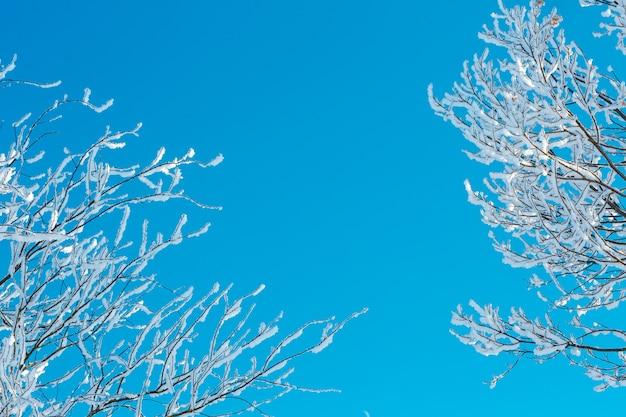 Дерево с ветвями в иней на ярко-синем небе в солнечный морозный день. копировать пространство