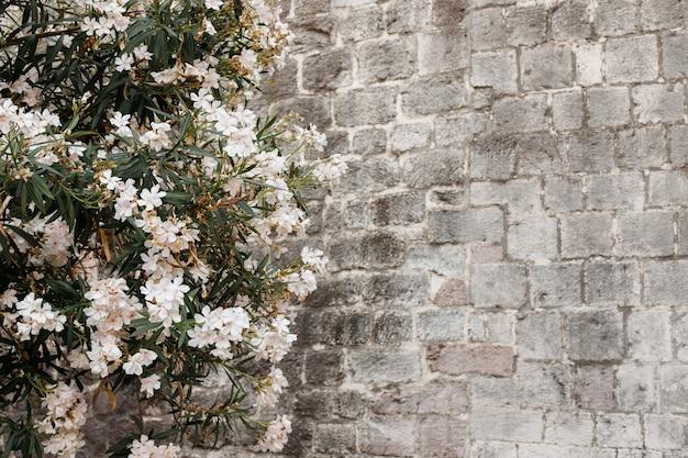 灰色の石の壁を背景に白い花を持つ木。バックグラウンド