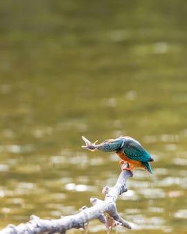 自然環境の熱帯の鳥