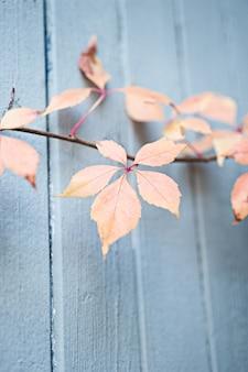 Вертикальный снимок ветки с оранжевыми и желтыми листьями