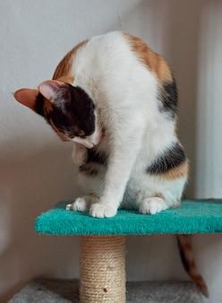 愛らしい三毛猫の縦ショット