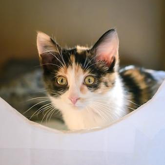 Очень милый пушистый трехцветный котенок мурлычет и смотрит вам в глаза
