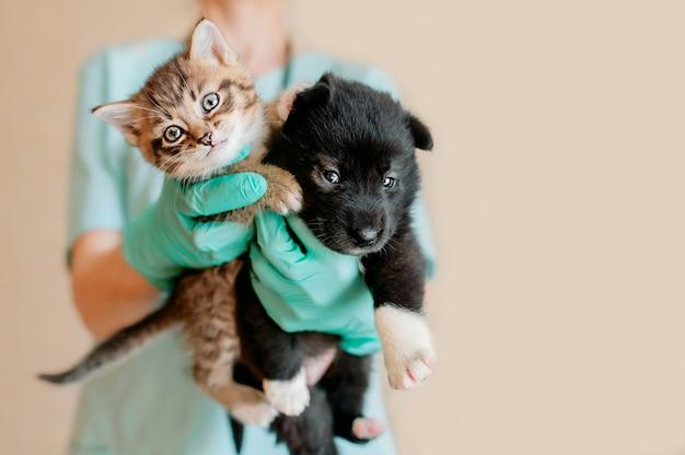 ターコイズブルーの制服を着た獣医が子犬と子猫を診察します。獣医の子犬と子猫。動物病院。ペットの検査と予防接種。健康管理。
