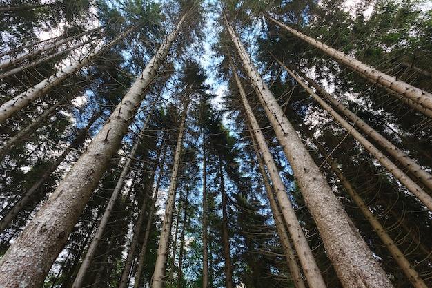 森の木々の下からの眺め