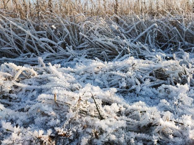 凍るような晴れた日に霜の結晶で覆われた乾いた草の眺め。