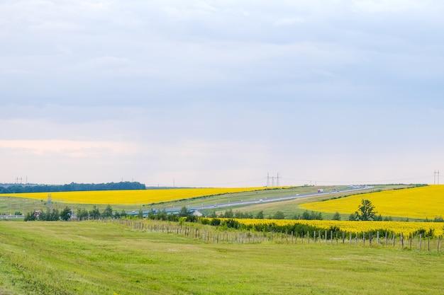 노란 해바라기가 만발한 들판과 자동차들이 여전히 빠른 속도로 달리는 고속도로의 모습. 여름날.