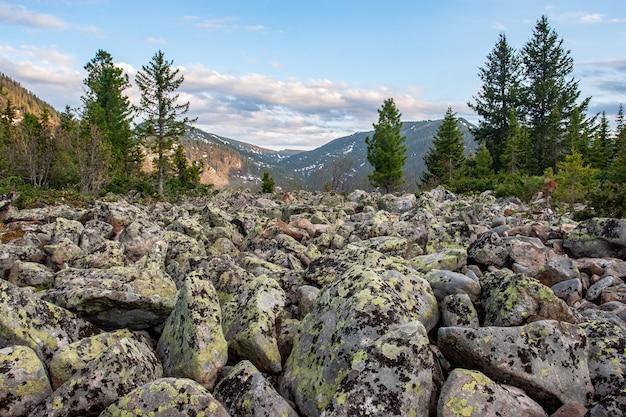 Вид на горы через скалистую реку из крупных камней и хвойных деревьев.