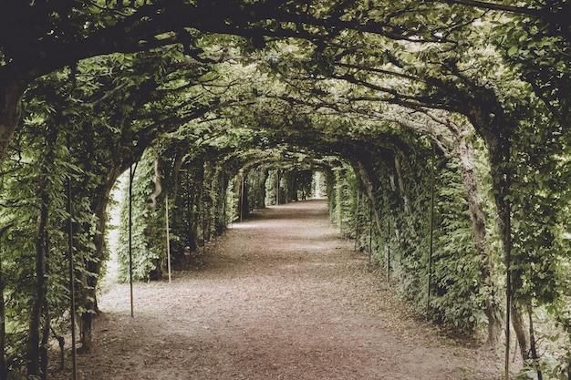 Прогулка по зеленому парку, вокруг ветви листвы и зеленых деревьев. летний пейзаж фон без людей