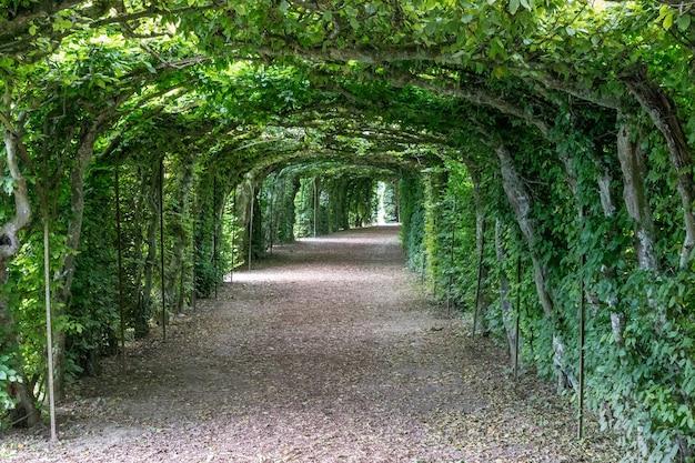 나뭇잎과 푸른 나무의 가지 주위에 녹색 공원에서 산책. 사람이 없는 여름 풍경 배경