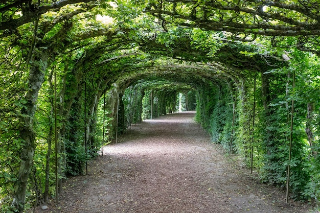 国立公園を散歩し、葉、花、緑の木々を囲みます。夏の風景の背景