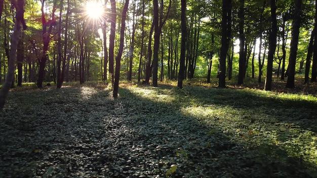 朝日に会うために森の中を散歩。