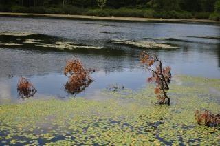 池バーモント州の散歩、
