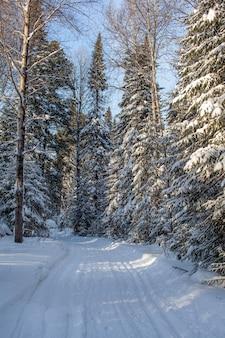 冬の森の散歩美しい冬の風景