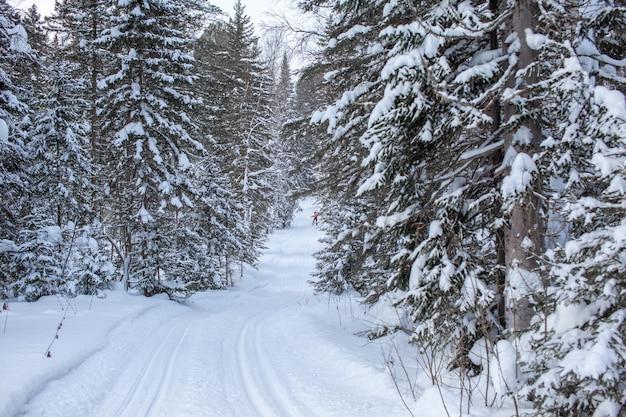 冬の森を散歩。雪の木とクロスカントリースキーコース。美しく珍しい道路や森の小道。美しい冬の風景。