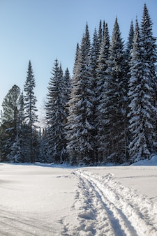 겨울 숲 속 산책. 눈 나무와 크로스 컨트리 스키 트레일. 아름답고 특이한 길과 숲길. 아름다운 겨울 풍경.