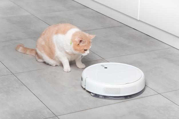 흰색 로봇 청소기가 주방을 청소하고, 아름다운 솜털 스코틀랜드 스트레이트 베이지 고양이가 놀란 표정을 짓고 있습니다. 바닥에 콘크리트 타일로 청소. 애완 동물과 스마트 홈.