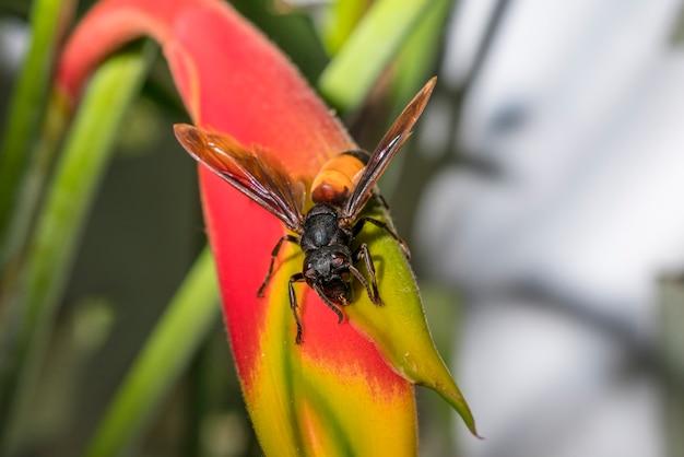 黄色い花のハチ。