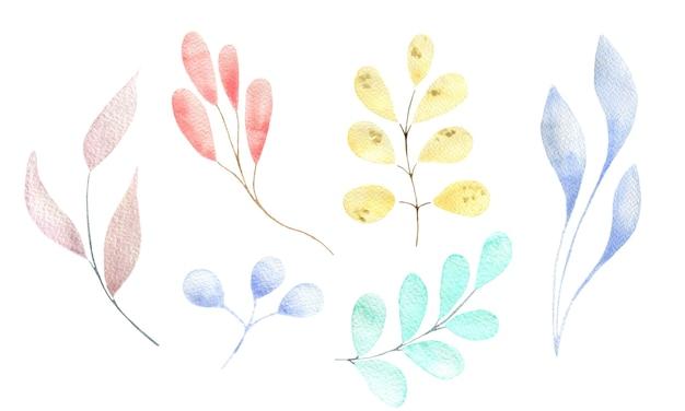 Акварельный набор различных веточек и листьев пастельных нежных цветов, изолированные элементы
