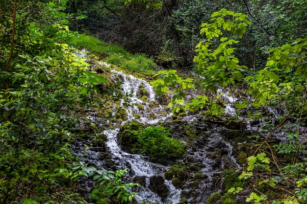 緑に囲まれた山の中の森の滝