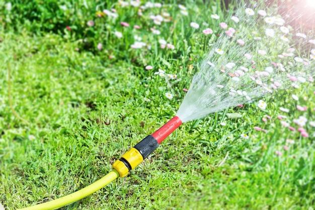 Поливочный шланг, из которого вода льется на газон с цветами ромашки, лежит на газоне