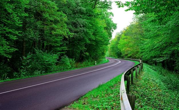 Мокрая асфальтовая дорога, ведущая через зеленый лиственный лес.