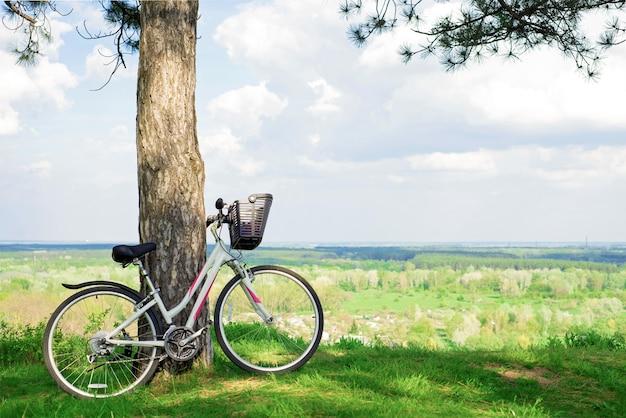 소나무 줄기에 기대어 숲의 작은 개간에 흰색 자전거