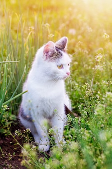 白猫が日光の下で庭に座っています