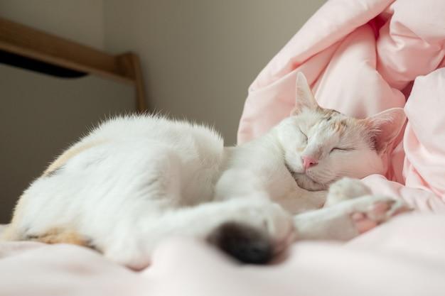 Белый кот спит на розовой кровати