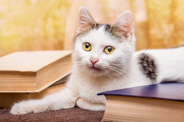 大きな黄緑色の目を持つ白い猫が本に座っています。読書小説
