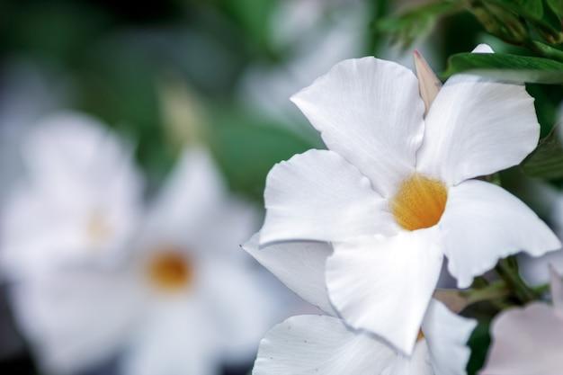 左側にコピースペースのある白い花