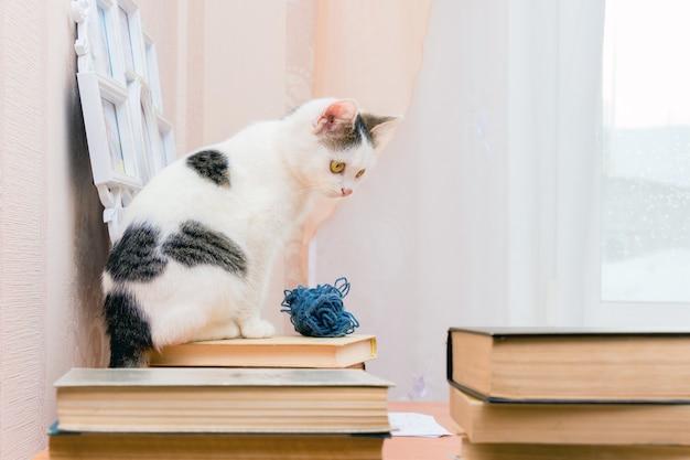 白い子猫が本に座って、別の本を見ます。本の中で図書館の読者