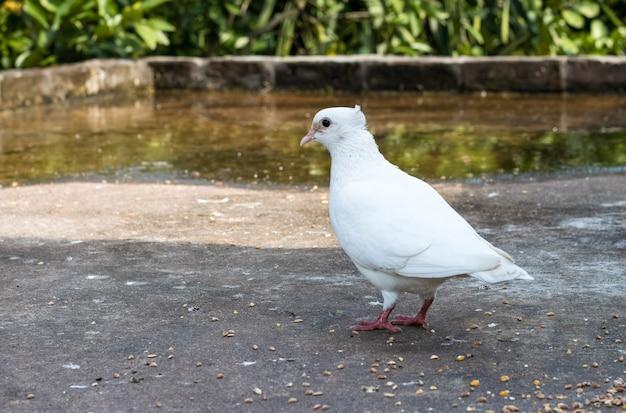 옥상에 혼자 서 있는 흰 비둘기