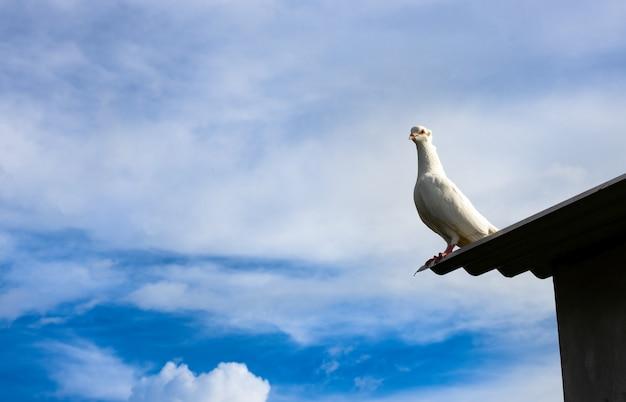맑고 푸른 하늘 아래 지붕 위에 서 있는 흰 비둘기