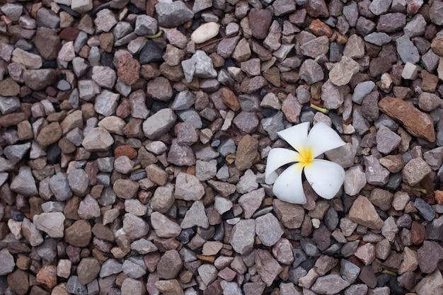 Белый цветок плюмерии на фоне пола пород