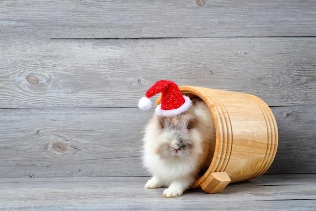 빨간 크리스마스 모자를 쓰고 나무 양동이에 숨어있는 흰 토끼.