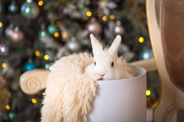 Белый кролик сидит в белой круглой коробке. рождественский декор