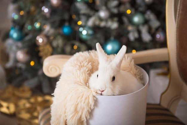 Белый кролик сидит в белой круглой коробке