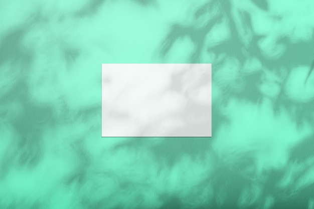 木の影と色の壁に白いシート