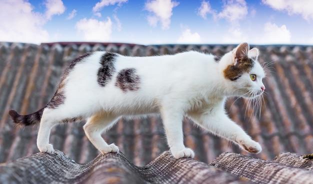 白い斑点のある猫が家の屋根に沿って行く